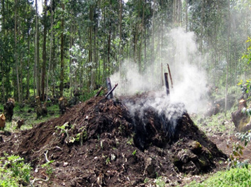 Charcoal making in Rwanda